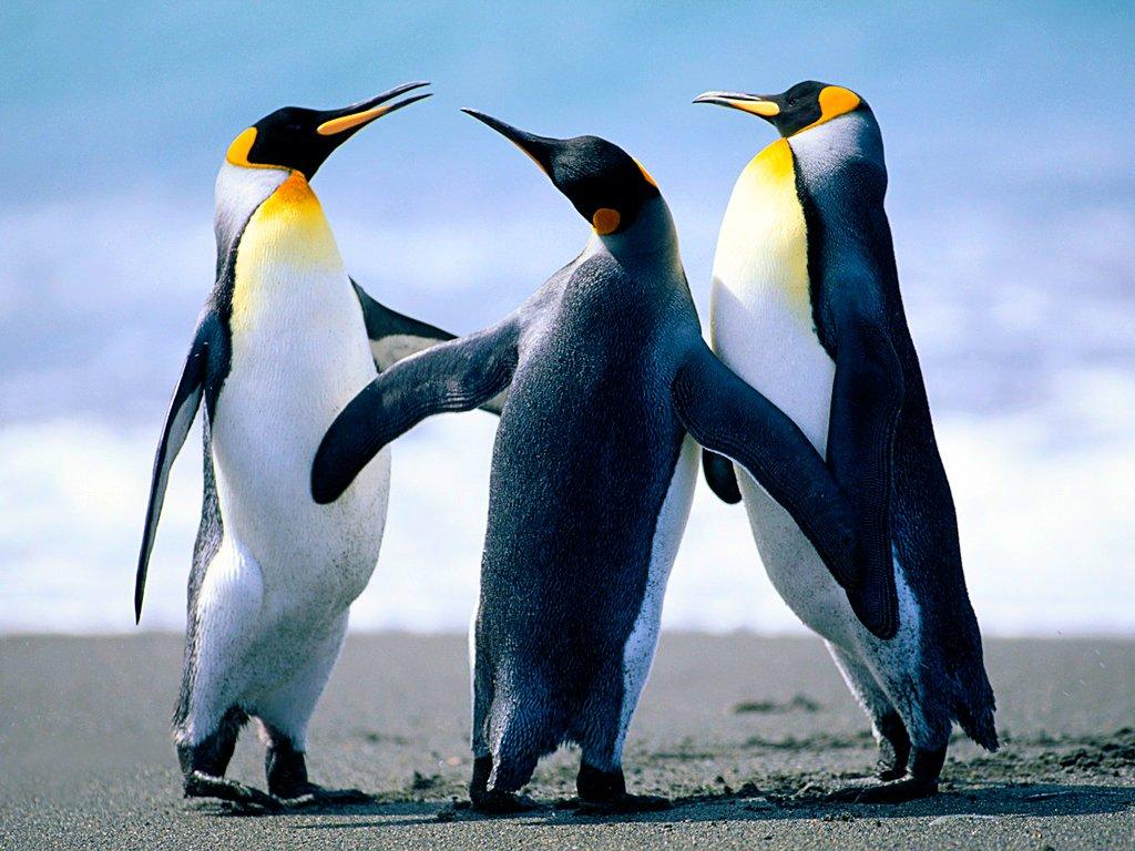fermeture exceptionnelle 26 décembre... dans BIJOUX penguins